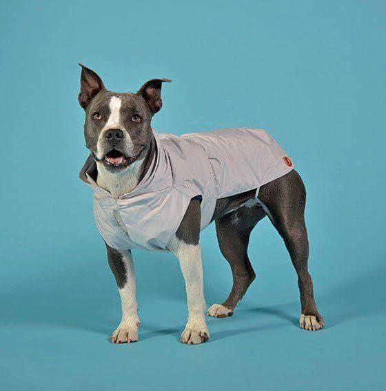 UNITED PETS e SAVE THE DUCK, cappotto, Olga